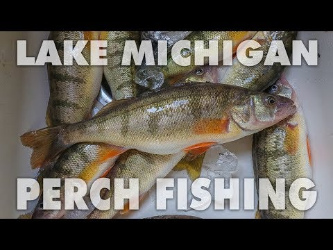 Navy Pier Perch Fishing and Underwater Footage
