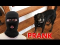 Burglar PRANK on my Dog! (Gone Wrong)