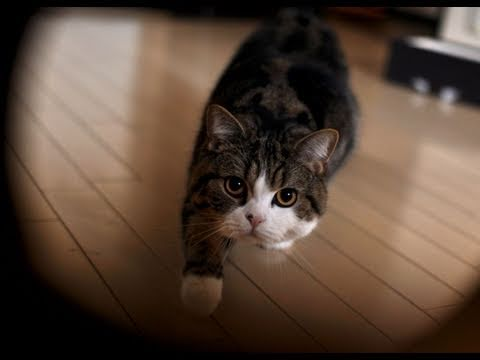 The Best Of Maru 2010