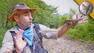 Snake LUNGES at My Face! by Brave Wilderness