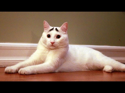 CATS so FUNNY they will make you LAUGH to DEATH - The BEST CAT videos