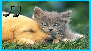 Video Musik Entspannende für Hunde ,Katzen ,Musik zum Schlafen Tiere 9 #GuteLauneMusik MP3, 3GP, MP4, WEBM, AVI, FLV Maret 2018