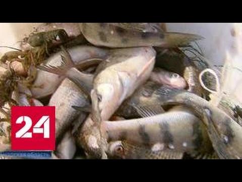 сколько стоит разрешение на ловлю сетями рыбы