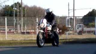 5. Triumph Thruxton SE 2010 Special Edition 1502260169 k