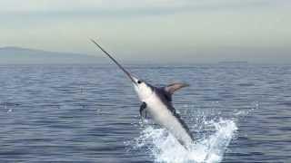Nonton Skin   Bones   Animal Life  Swordfish Film Subtitle Indonesia Streaming Movie Download