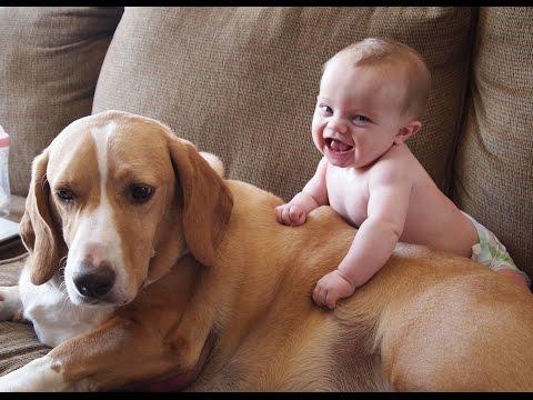 simpatici gatti e cani amano i bambini. compilation