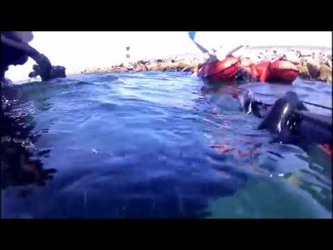 Caça submarina ao peixe porco