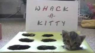 Whack-A-Kitty ^^