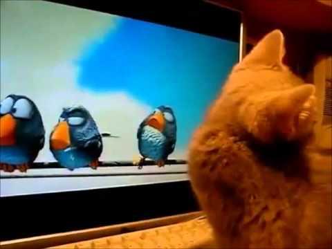 lustige Katze jagt virtuelle Vögel zum totlachen.wmv
