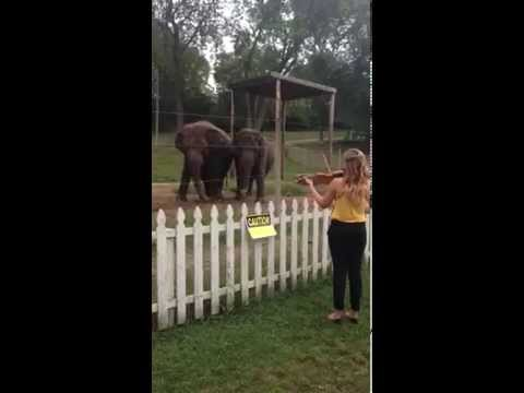 una donna suona un violino e gli elefanti ballano a tempo sulle sue note
