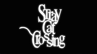 Видео Stray Cat Crossing