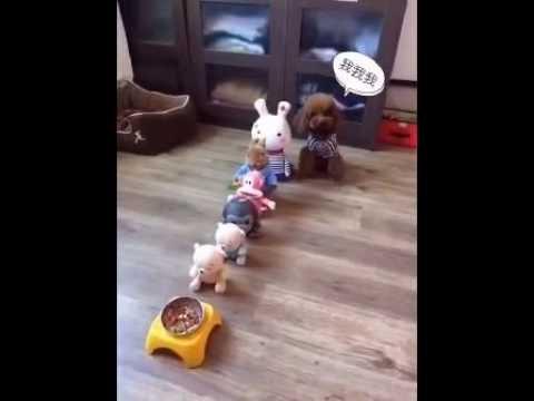 排隊吃飯,排在最後的六一小朋友等不急了,這狗狗真可愛