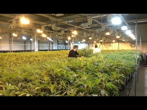 High Times in Kanada: Cannabis ist bald legal, kanadisc ...