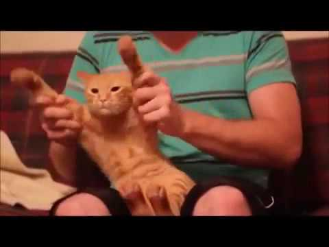 Cat And Dog Dancing On Music Song Very Funny Video