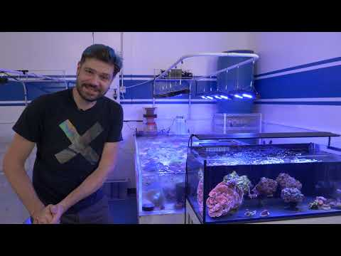 Vlog 23: The Coral Table