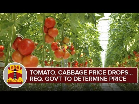 Tomato-Cabbage-Price-Drops-as-Yield-Increase-Farmers-Request-Govt-To-Determine-Price