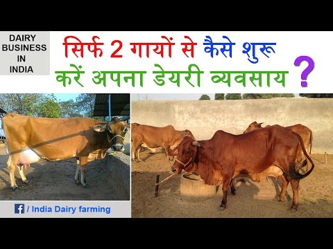dairy farming in india Starting a dairy farm in india this post was initially prepared by late dr p a deore most of the information about dairy farming for prospective indian entrepreneur is available in this post.