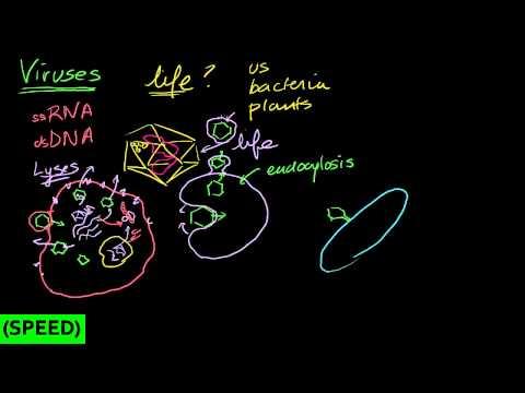 how to dissolve adenosine