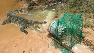 Creative Boy Makes Crocodile Trap Using Buckets & Net Trap - How To Make Crocodile Trap Work 100%