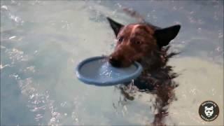 Journée casting by Dog Model Agency!
