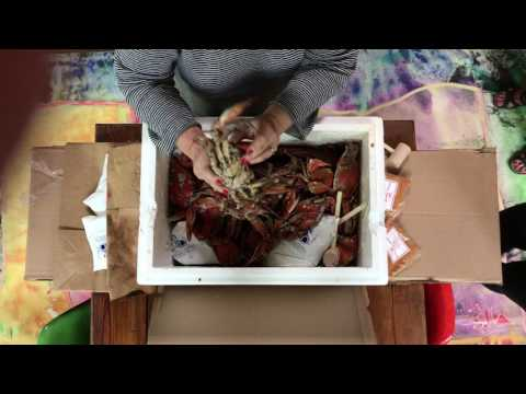 Cameron's Seafood Unboxing Maryland Blue Crabs