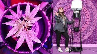 How To Grow Weed at Home w/ Macdizzle420 & Glo Gro Lighting!!! by HighRise TV