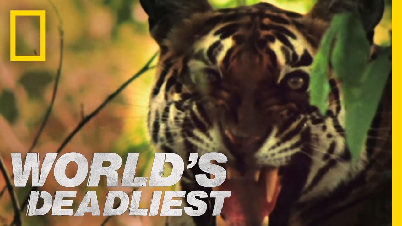World's Deadliest – Tiger vs. Monkeys