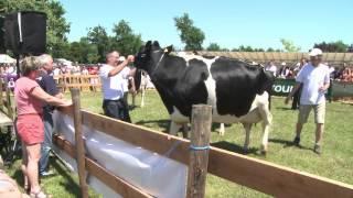 Reportage Fête de la vache