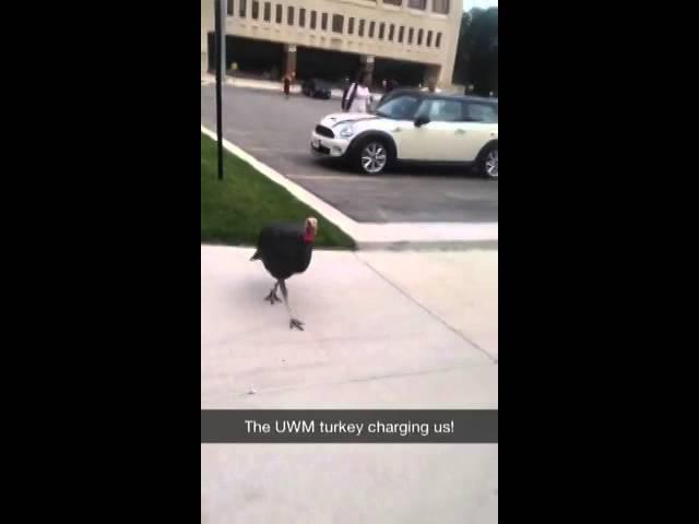Man vs Turkey – Viral Video