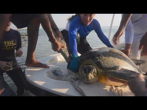 Παρακολουθώντας τις θαλάσσιες χελώνες του Περσικού Κόλπου – science