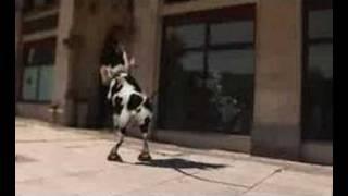 Video Cow Dance MP3, 3GP, MP4, WEBM, AVI, FLV November 2018