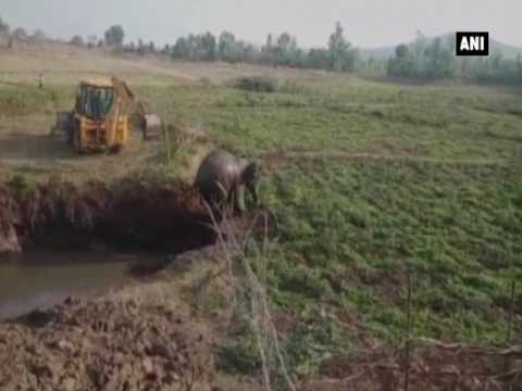العرب اليوم - بالفيديو: لحظة إنقاذ فيل بعد سقوطه فى حفرة كبيرة في الهند