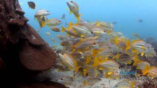 Heron Island Australia  city photo : Heron Island travel video guide Queensland Australia