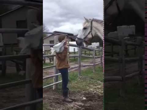 這女生戴上馬頭面具跟馬玩,當她摘下面具後馬整個懵掉...之後的反應太搞笑了!