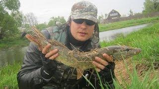 Ловля весенней щуки на спиннинг. Техасская оснастка. 1,42 кг / Pike Spin Fishing. Texas Rig. 1,42 Kg