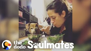 Paralyzed Dachshund Eats Dinner with Her Mom Every Single Night | The Dodo Soulmates by The Dodo