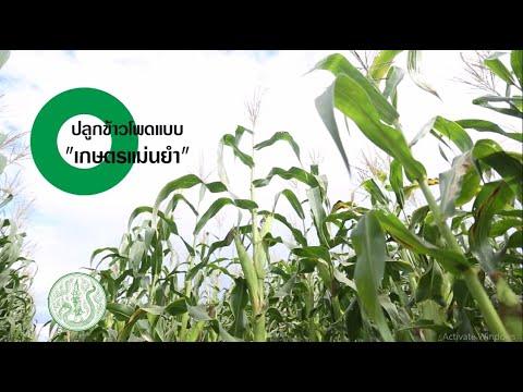 """วีดีทัศน์ด้านการเกษตรวิถีใหม่ ตอน ปลูกข้าวโพดแบบ """"เกษตรแม่นยำ"""""""