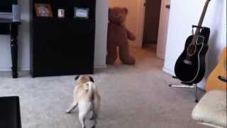 This Dog Gets His Revenge For Being Teased