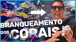 Neste vídeo rápido, o prof. Jubilut explica como acontece o branqueamento dos corais. Um problema ambiental que ameaça 25% das espécies marinhas. ★ Estude no BIOLOGIA TOTAL: http://www.biologiatotal.com.br★ INSTAGRAM: http://instagram.com/paulojubilut/★ FACEBOOK: http://www.facebook.com/biologiajubilut★ TWITTER: http://twitter.com/Prof_Jubilut