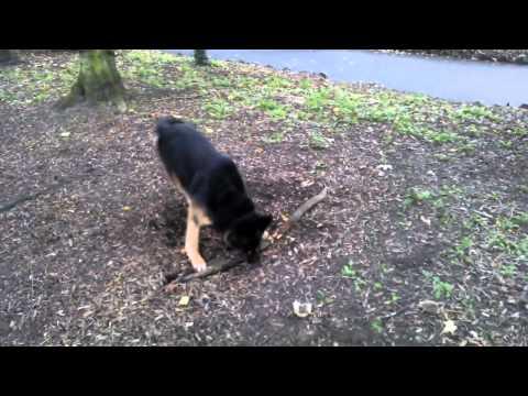 El perrito quiere su rama