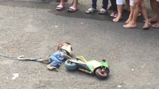 Video Walking street monkey show, Surabaya MP3, 3GP, MP4, WEBM, AVI, FLV Mei 2017