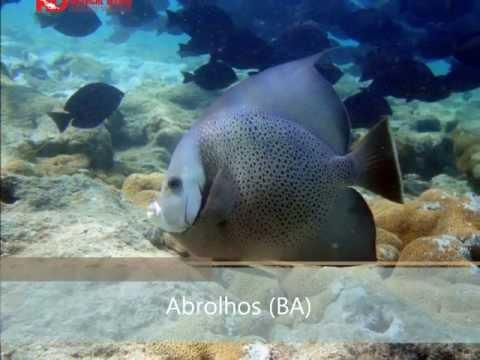 Video of Meinicke Divers - Mergulho RJ