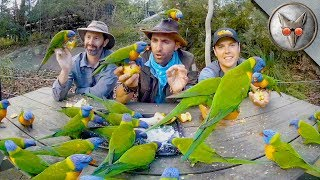 Parrots Crash our Picnic! - in VR180! by Brave Wilderness