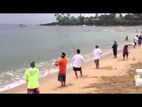 Catching Halalu – Waimea Beach, Oahu Aug 2013