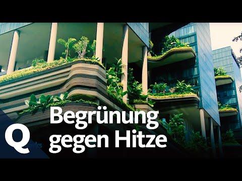 Wie der Klimawandel Städte aufheizt und wie Urban Gardening das ändern kann
