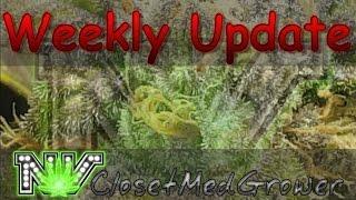 Weekly Update 3/15/2017 by  NVClosetMedGrower