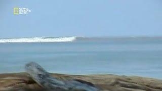 Video Le tsunami du 26 décembre 2004 - Top 100 catastrophes naturelles MP3, 3GP, MP4, WEBM, AVI, FLV Juni 2019