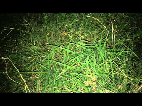 A Man Reveals a Frightening Number of Spiders in His Yard With a Clever Flashlight