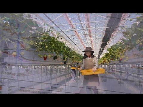 Ιαπωνία:Η υψηλή τεχνολογία στην υπηρεσία της γεωργίας – focus