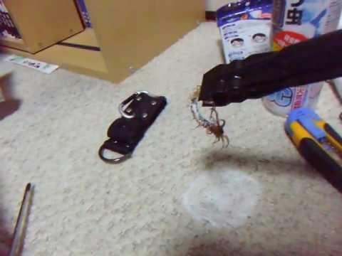 實戰片段 冷凍噴霧殺蟲 瞬間僵硬大蜈蚣
